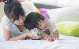 Do's and Don'ts of Living with Pets and Air Conditioning